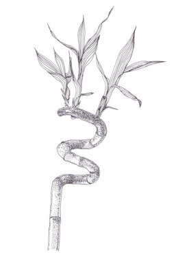 Plakat Black ink dots drawing sketch of bamboo branch isolated on white background. Hand drawn illustration of beautiful bamboo brunch spiral with leaves.