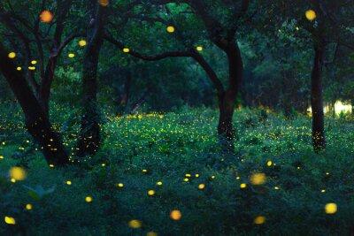 Plakat Bokeh światło świetlik w lesie