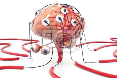 An analysis of the human brain
