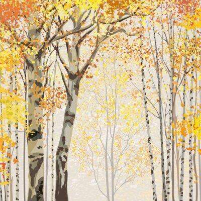 Plakat Brzozowy gaj w czasie jesieni