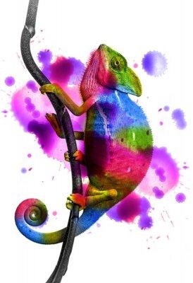 Plakat Chameleon - kolory