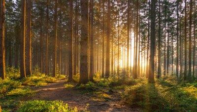 Plakat Cichy Las na wiosnę z pięknymi jasnymi promieniami słońca
