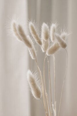 Plakat Close-up of beautiful creamy dry grass bouquet. Bunny tail, Lagurus ovatus plant against soft blurred beige curtain background. Selective focus. Floral home decoration. Vertical.