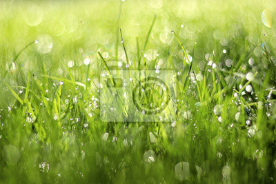 Plakat Close up photo of green grass in morning dew. Natural floral texture background. Selective focus, shallow depth of field. Beautiful natural bokeh of water drops.