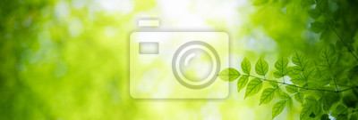Plakat Closeup nature view of green leaf on blurred greenery background under sunlight with bokeh and copy space using as background natural plants landscape, ecology cover page concept.