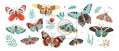 Plakat Collection of elegant exotic butterflies and moths isolated on white background. Set of tropical flying insects with colorful wings. Bundle of decorative design elements. Flat vector illustration.