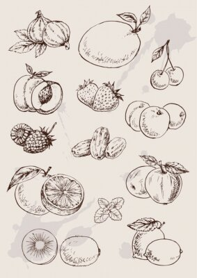 Plakat collection of  hand drawing isolated  fruits