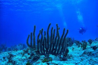 Plakat coral reef underwater landscape, lagoon in the warm sea, view under water ecosystem