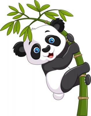 Plakat Cute funny baby panda wiszące na drzewie bambusa
