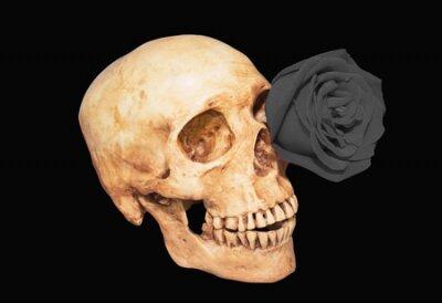 czarna róża w oko czaszki czarnym tle, clipping path