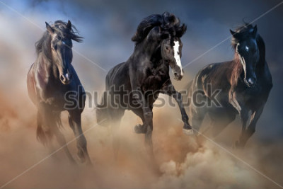 Plakat Czarne ogiery biegną galopem w pustynnym pyle przed dramatycznym niebem