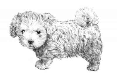 Plakat czarno-białe rysowane ręcznie obraz szczeniak, urocza szkic szczeniak wyizolowanych na białym tle do weterynarza, salon pielęgnacji zwierząt domowych, opieki lekarza weterynarii lub sklepie zoologiczn