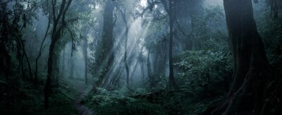 Plakat Deep tropical forest in darkness