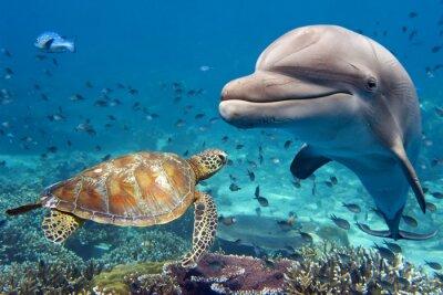 Plakat Delfin i żółw na podwodne rafy