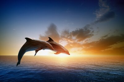 Plakat Dolphins Jumping