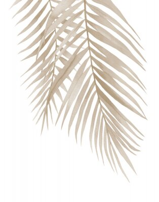 Plakat Dried palm branches. Pastel beige leaves. .Watercolour illustration isolated on white background.