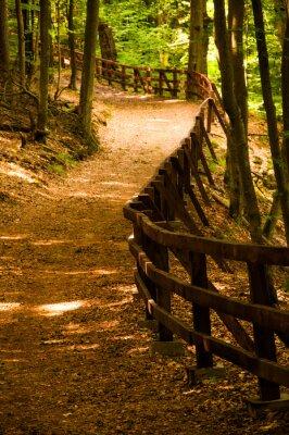 Plakat Droga w lesie