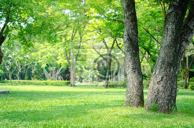 Plakat Drzew w parku z zielonej trawie i sunlight,? Wie? E zielone t? O charakteru.