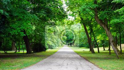 Plakat drzewa w parku i chodnik