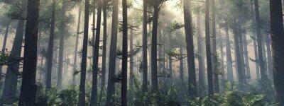 Plakat Drzewa we mgle. Dym w lesie rano. Mglisty poranek wśród drzew. Renderowania 3D