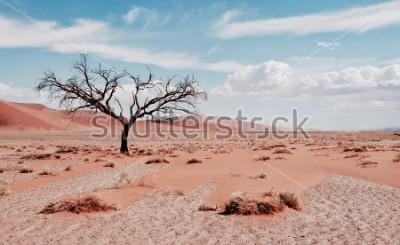 Plakat Drzewo pustyni