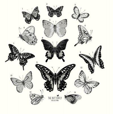 Plakat Duża kolekcja motyli, ręcznie rysowane zestaw isolated.Vector Ilustracja