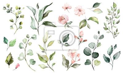 Plakat Duży zestaw elementów akwarela - kwiaty, zioła, liść. kolekcja ogrodu i dzikie, leśne zioła, kwiaty, gałęzie. ilustracja odizolowywająca na białym tle, egzotyczny liść. Botaniczny