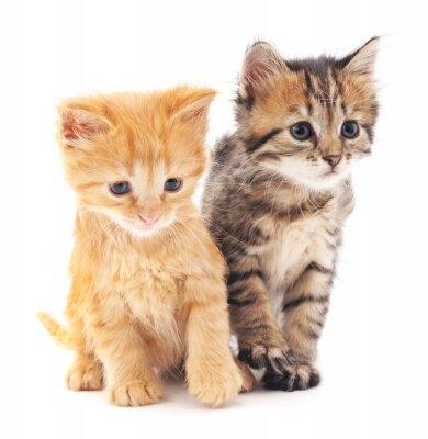 Plakat Dwa kociaki.