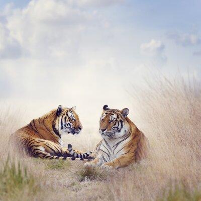Plakat dwa Tygrysy