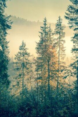 Plakat Dziki las w jesiennych czasie sezonu, styl vintage stonowanych