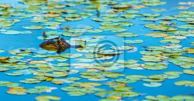 Plakat Dzikie Krokodyl