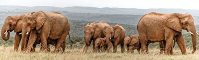 Plakat Elephant Herd