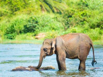 Plakat Elephatnt