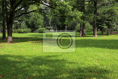 Plakat empty city green park with lawn tall trees and trimmed grass with fallen leaves on an early sunny warm morning