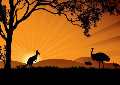 Plakat emu kangura słońca