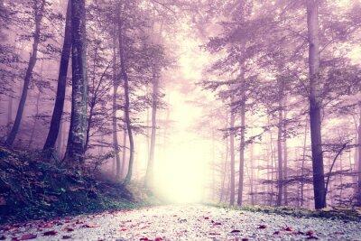 Plakat Fantasy fioletowy kolor mglisty las drogowego. Dreamy bajkowy kolorowy krajobraz las.