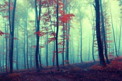 Plakat Fantasy rocznika las jesienią