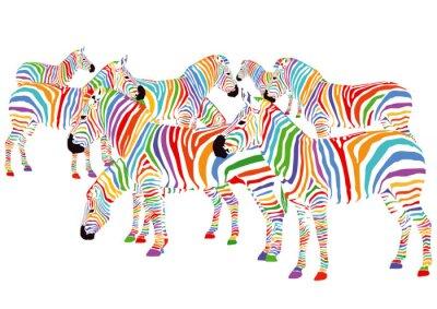 Plakat Farbenfrohe Zebry