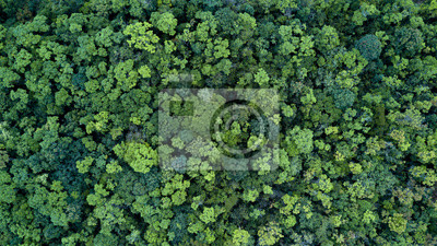 Plakat Forest and tree landscape texture background, Aerial top view forest, Texture of forest view from above.