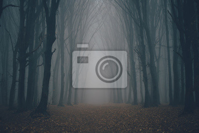Plakat Forest in fog with mist. Fairy spooky looking woods in a misty day. Cold foggy morning in horror forest with trees