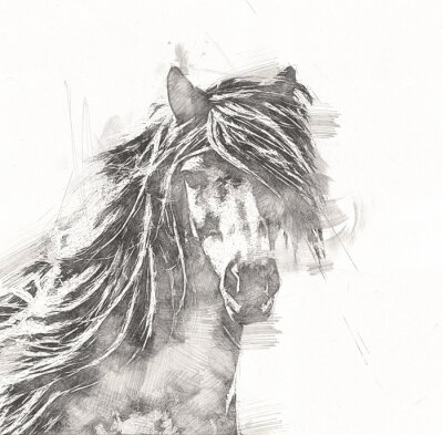 Plakat freehand horse head pencil drawing