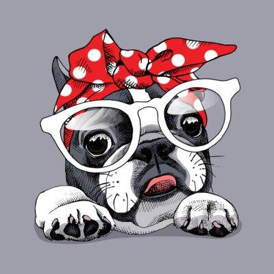 French Bulldog portret w pałąk i okulary. ilustracji wektorowych.