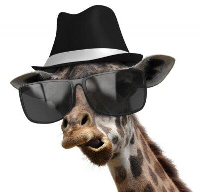 Plakat Funny portret zwierzę żyrafa z odcieni i fedora