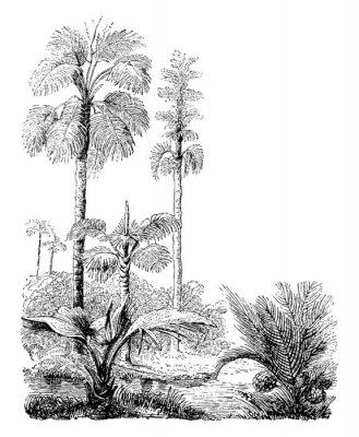 Plakat Gebang and Nipa Palm Trees vintage illustration.