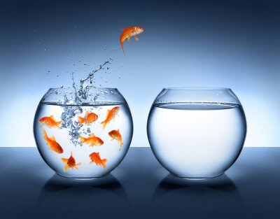 Plakat Goldfish skoki - poprawa i kariera koncepcja