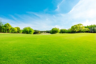 Plakat Green grass and forest in spring season.