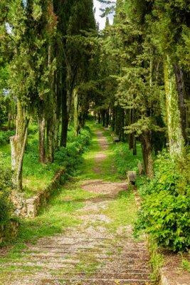 Plakat green leafy avenue