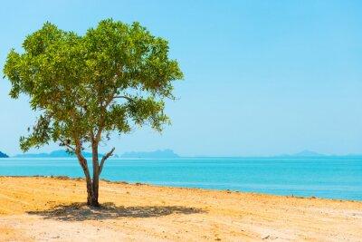 Plakat Green tree in desert and landscape with island on blue sea. Thailand, Ko Lanta island