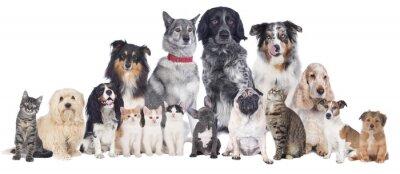 Plakat Grupa psów i kotów