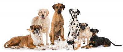 Plakat Gruppe verschiedener Hunde - Grupa psów
